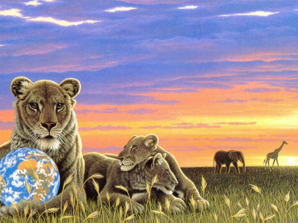 Обои для рабочего стола - Животные | Desktop Wallpapers Animals